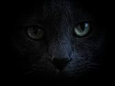 cat pixabay altered